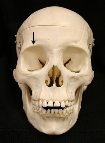 Lateral Cephalometric Skull Anatomy Part I Dr G S